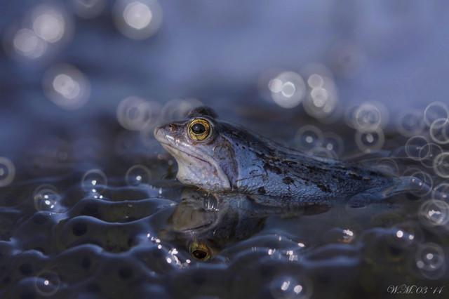 frogs-macro-photography-wil-mijer-3