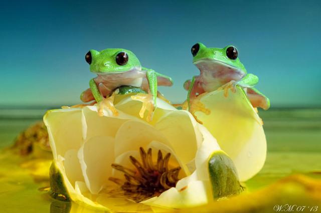 frogs-macro-photography-wil-mijer-6