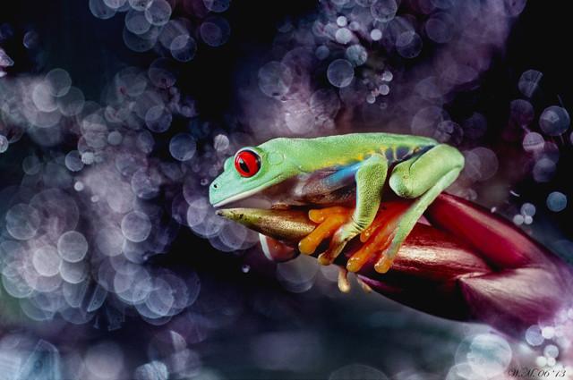 frogs-macro-photography-wil-mijer-7