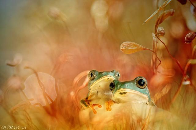 frogs-macro-photography-wil-mijer-8